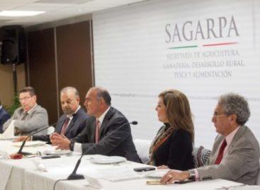 México, altamente competitivo en el sector agroalimentario: Calzada Rovirosa