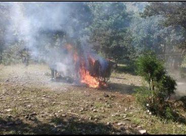 Destruye policía plantío de 200 metros cuadrados de marihuana en la Sierra Sur de Oaxaca
