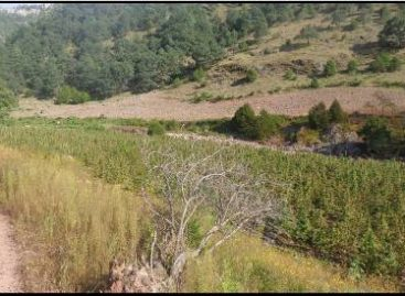 Destruye Policía Estatal dos plantíos de marihuana en la Sierra Sur de Oaxaca