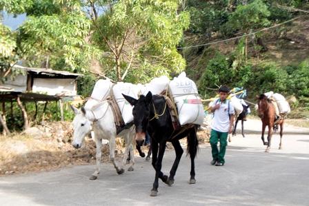 Abastecerá a almacenes de Chiapas