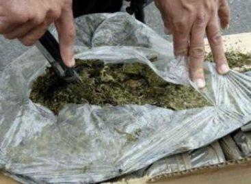 Impide Policía Federal comercialización de más de 30 kilos de marihuana en la ciudad de México