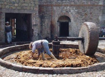 Solicita Senado proteger a pequeños productores de mezcal del país