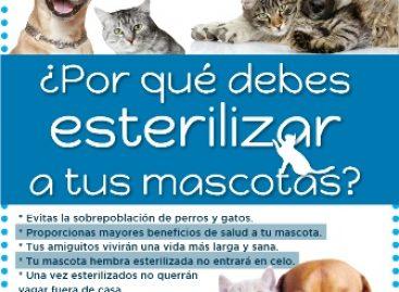 Inicia campaña permanente de esterilización de perros y gatos en Oaxaca
