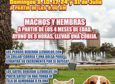 Realizará APAOAX esterilizaciones gratuitas durante julio con calidad y calidez en Oaxaca