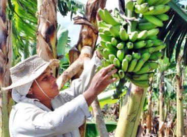 Empoderar a las mujeres rurales y propiciar su crecimiento económico inclusivo: CNDH