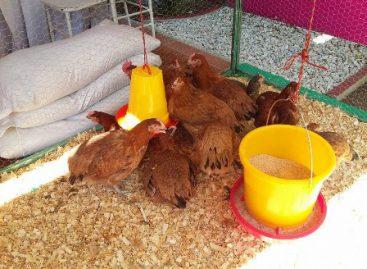 Ejercen más de 173 mp para unidades de producción avícola en Santa Lucía del Camino