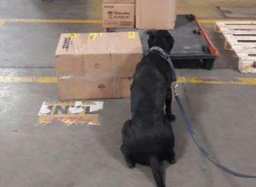 Detecta binomio canino de la Policía Federal casi tonelada y media de marihuana en Coahuila
