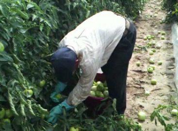 Viajarán 60 jornaleros agrícolas oaxaqueños para laborar en Estados Unidos