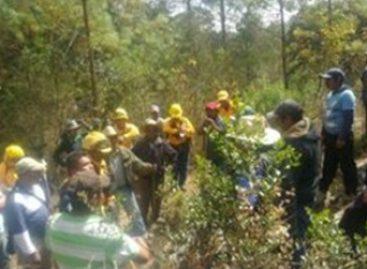 Consume incendio 50 hectáreas de pastizal, arbusto y árboles de pino en Tlaxiaco, Oaxaca