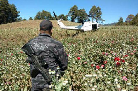 Destruye PGR Oaxaca plantío de amapola de más de 13 mil metros cuadrados