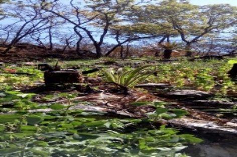 En operativo conjunto, destruyen más de dos mil metros cuadrados de amapola