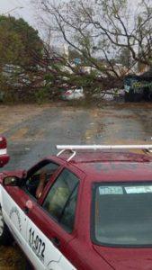 Cuantiosos daños materiales dejó el viento y la lluvia.