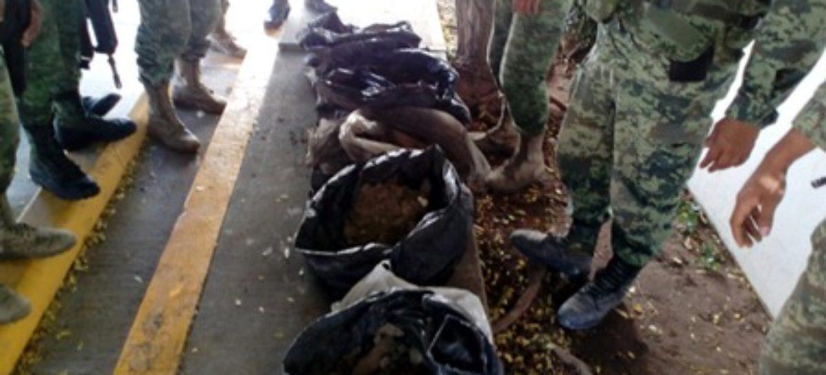 Localizan 60 kilogramos de goma de opio en Tamazula, Durango
