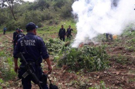 Destruyen e incineran dos plantíos de marihuana en San Juan Lachigalla, Oaxaca