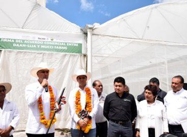 Firman convenio Daan-Llia y Empresa Mucci Farms para exportar tomate y pimiento morrón a EU y Canadá