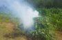 Destruye e incinera PGR Oaxaca plantío de marihuana de más de tres mil metros cuadrados