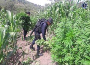 Elementos de la Policía Estatal participaron en coordinación con la PGR.