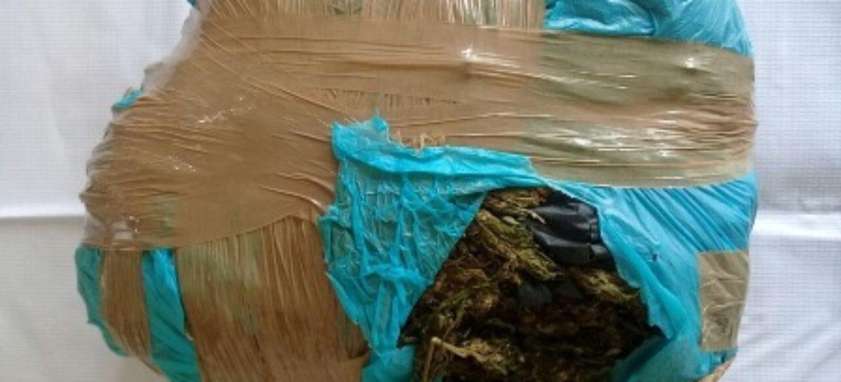 Detiene Policía Estatal a sujeto con dos kilos de marihuana en el Istmo de Tehuantepec