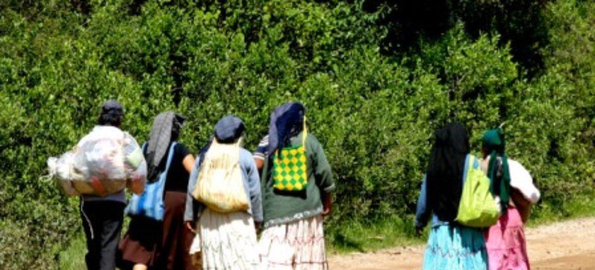 Población indígena de México con mayor probabilidad de caer en pobreza: IBD
