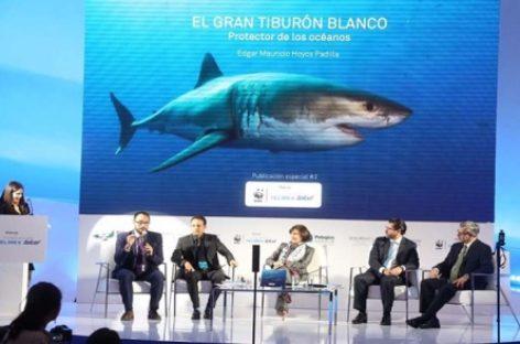 México, el mejor lugar del mundo para avistamiento del gran tiburón blanco: Isla Guadalupe