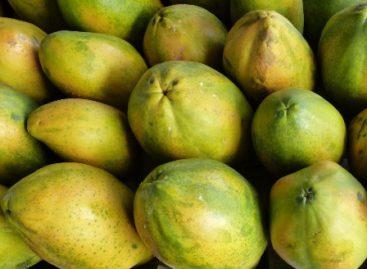 22 productos agrícolas oaxaqueños en el ranking nacional: Economía
