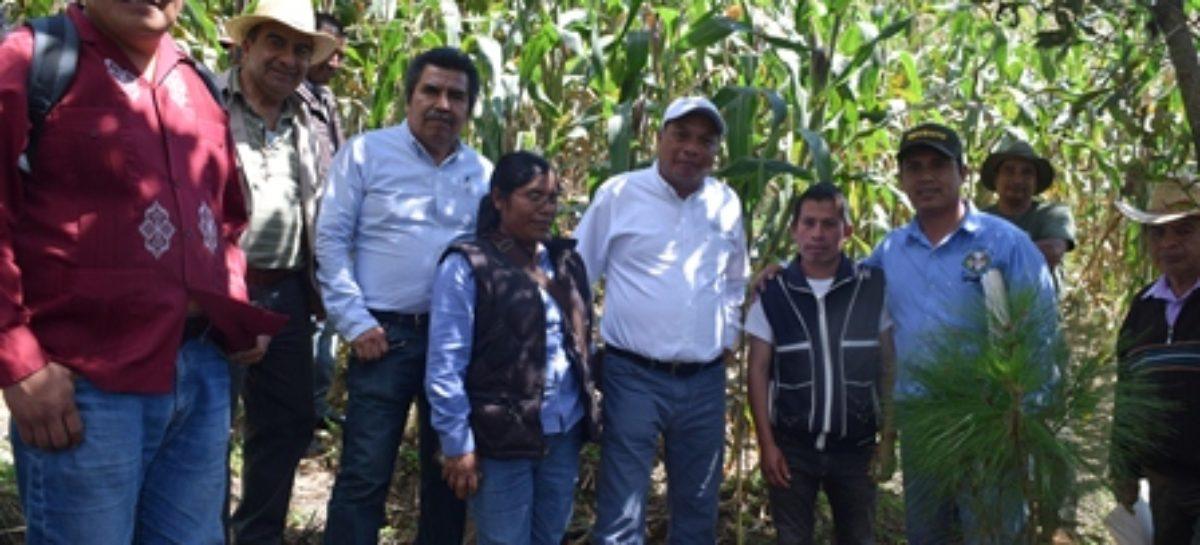 En la Sierra Norte, entrega SAGARPA Oaxaca 3.5 mdp en apoyos para el campo