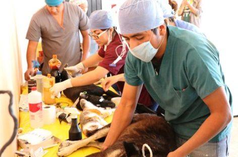 Realizan campaña de esterilización gratuita de perros y gatos en Xoxocotlán
