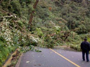 Los fuertes vientos han deribado árboles.