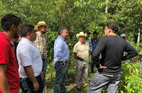 Fortalecerán Nestlé México y cafeticultores de la Sierra Mazateca comercialización del grano
