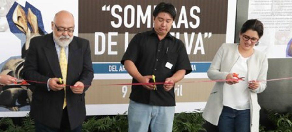 """Inauguran exposición """"Sombras de la selva"""" en el Senado de la República"""