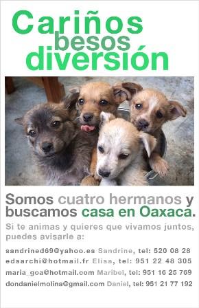 Hay cuatro Cachorritos en adopción