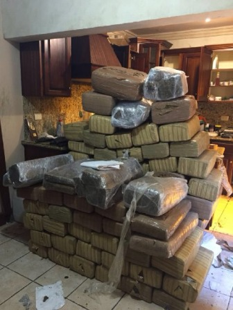 Localiza Policía Federal cuatro invernaderos de marihuana y asegura 618 kilos de droga en Tamaulipas
