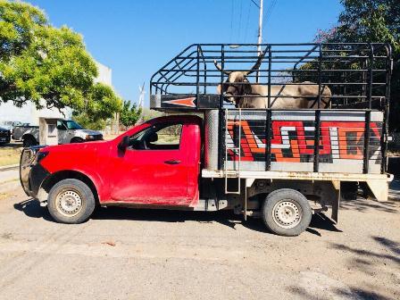 Detiene Policía Estatal a cuatro personas por no acreditar propiedad de ganado
