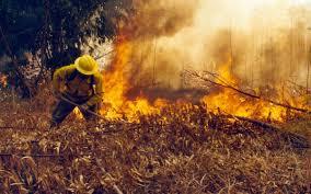Oaxaca primer lugar nacional en incendios forestales con 48 mil hectáreas