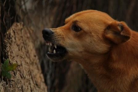 Ningún caso de rabia por perros