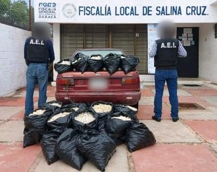 Aseguran 24 mil huevos de tortuga en Santo Domingo Tehuantepec, Oaxaca
