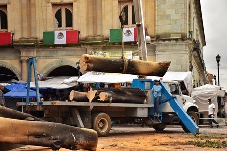 Dará Ayuntamiento atención integral al arbolado urbano del Zócalo de la ciudad de Oaxaca