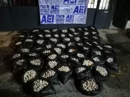 Aseguran cargamento de 30 mil huevos de tortuga en Huamelula, Oaxaca; Un detenido