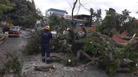 Atienden afectaciones en arbolado urbano por fuertes vientos en la capital oaxaqueña