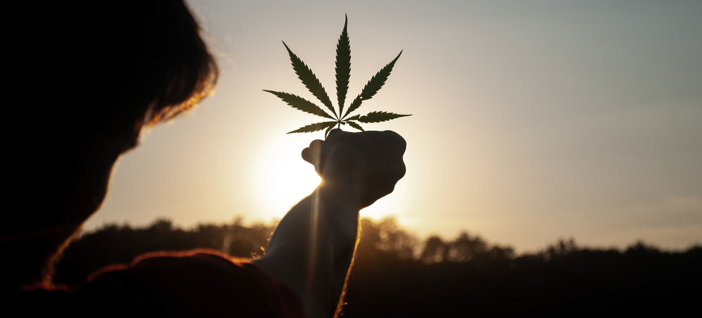 MARIHUANA YA NO FIGURA EN LAS LISTAS DE ESTUPEFACIENTES COMO DROGA PELIGROSA: ONU