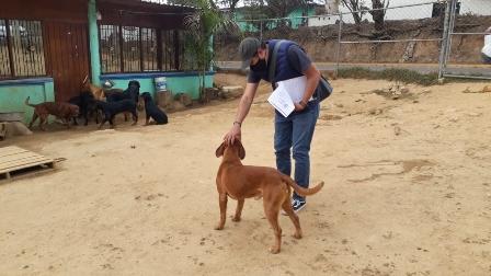 Atienden maltrato animal