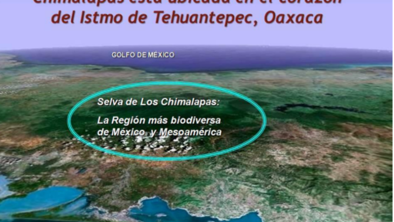 Comunicado del Comité Nacional para la Defensa y Conservación de los Chimalapas a la Suprema Corte de Justicia de la Nación por la Controversia Constitucional por invasión a los territorios de los pueblos zoques de Santa María y San Miguel Chimalapa de Oaxaca, alentada por los gobiernos de Chiapas
