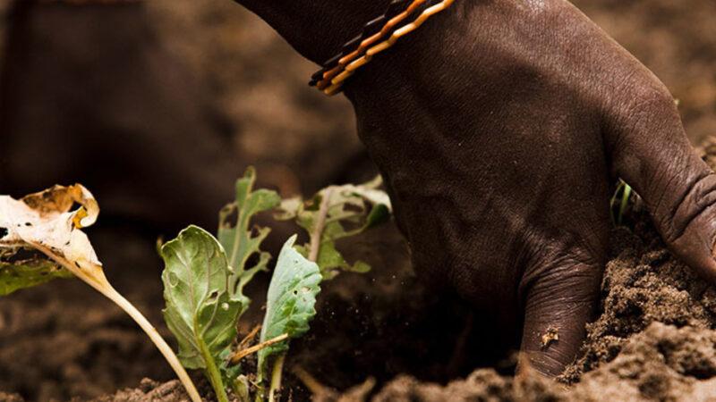 Los suelos salinos se convierten en un nuevo peligro para nuestra alimentación