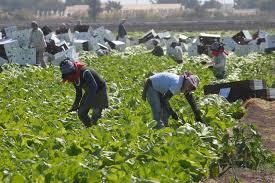 Piden a la Secretaría del Trabajo proteger a jornaleros