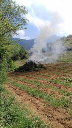 Destruyen e incineran plantío de marihuana de mil 500 metros cuadrados en Ejutla, Oaxaca