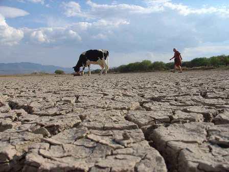 Hacer frente a la desertificación
