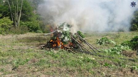 Destruyen e incineran
