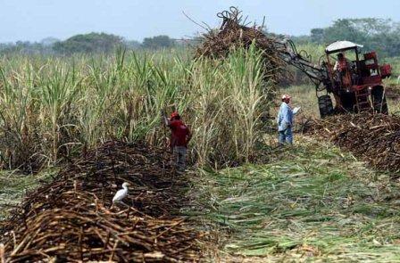 Oaxaca entre los principales productores