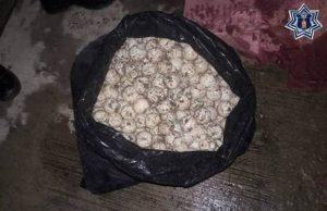 En una bolsa de nylon fueron localizados 800 huevos de tortuga.