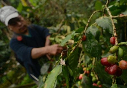 Café de Oaxaca, un orgullo a nivel mundial que se envía a países europeos